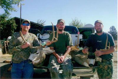 California Mule Deer, Modoc County